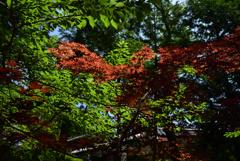 200629長弓寺09
