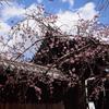 200320f妙覚寺45