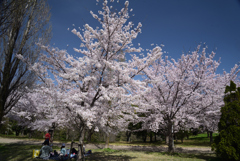 210331a山田池公園01