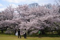 200402a京都植物園43