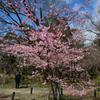 200303京都植物園41