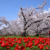 200402a京都植物園54