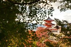 秋の京都さんぽ-1