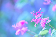山頂近くで咲く花