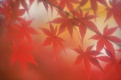 紅葉_2235