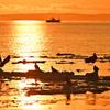 国後島と漁船と流氷の鷲