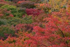 秋の京都さんぽ-2