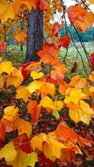 秋色。. •*¨*•♬✧