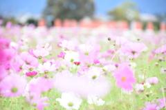 咲き誇る花♪♬.*゚