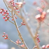 春よ来い♪*:.。..。.:+・゚・*