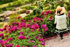 薔薇を愛でる人…♪