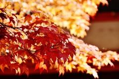 秋深まる♪(ღˇᴗˇ)。o♡