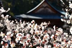春だ~♪((o(^∇^)o))