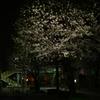 桜が丘という街で