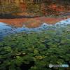 湖映のいもり池