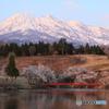 満開の桜と妙高山