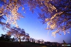 満開の桜とポラリス