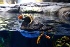 くちばしの美しい鳥