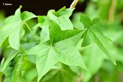 緑色の葉~異常気象