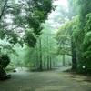 朝霧の高原