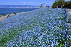 空と海と花が奏でる青のシンフォニー