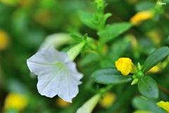 白い可憐な花