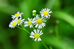 夏の終わりの高原の草花③