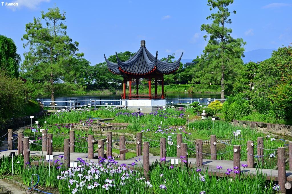 花菖蒲の公園