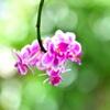 朝露と花Ⅰ