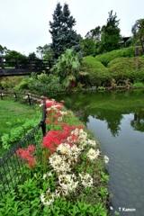 ヒガンバナと池