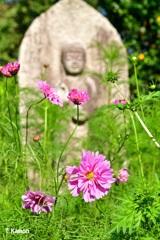 仏花(ぶっか)