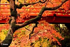 苔生す幹と紅葉
