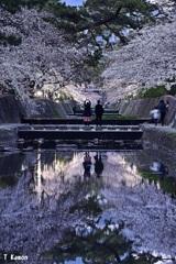 夙川の桜③