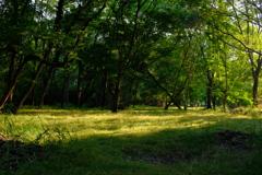 森林  光指す