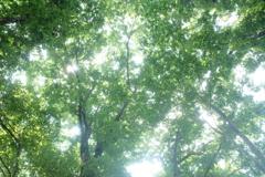 夏の 木陰