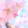 春の  陽気
