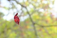 冬 告げる  落葉
