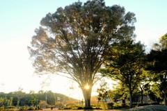 公園の夕景