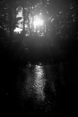 森林の小川  サン ロード