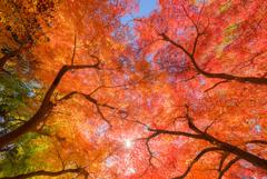 見上げれば…秋