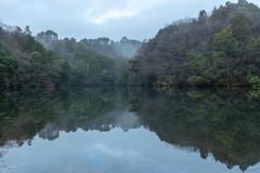雨上がりの森の池。