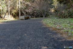 森への道。