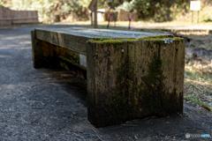 森のベンチ。