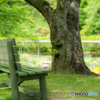 藤の花を見下ろすベンチ。