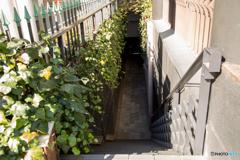 大人の階段。