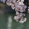 やっぱり玉ボケが好き! ~桜は今年も咲いている~