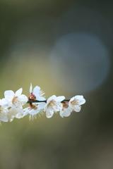 やっぱり玉ボケが好き ~柔らかな春の陽射しのもと~