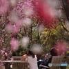 momo blossom その4 ~特等席~