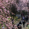 桜祭り\(^o^)/