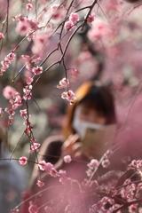花のような人 ~梅林の美髪美人編~
